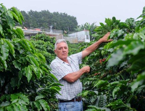 Costa Rica – Steven Mora Caturra