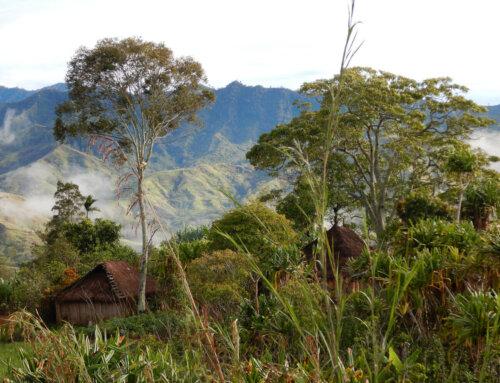 PNG – Korofeigu Organic