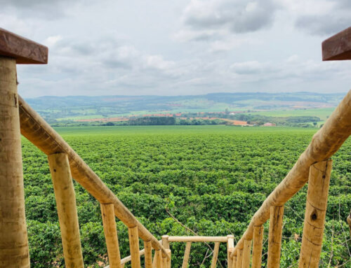 Brazil – Fazenda Chapadão de Ferro