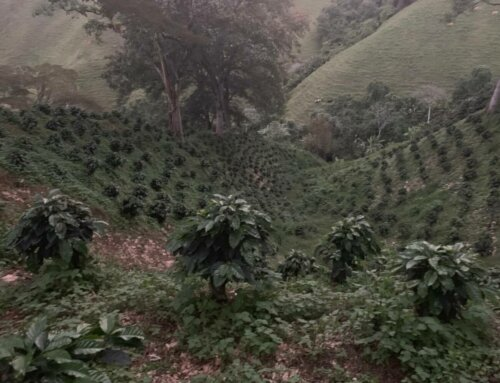 Colombia – Tolima Excelso Organic