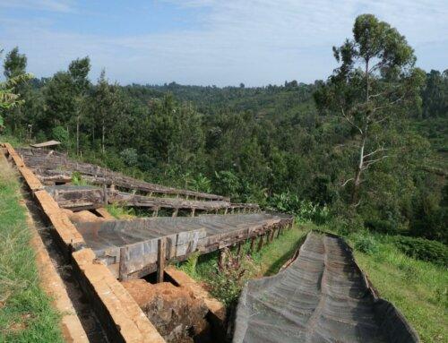 Kenya – Kiganjo AB
