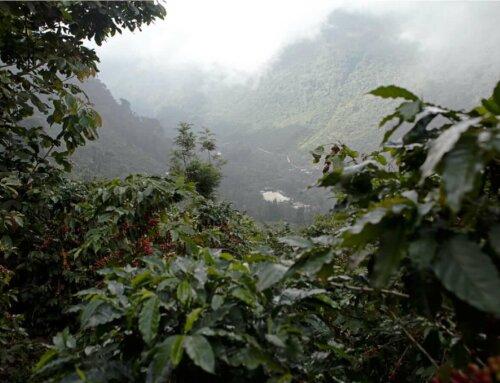 Guatemala – Rodulfo López
