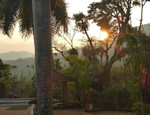 India – Ginimao Estate