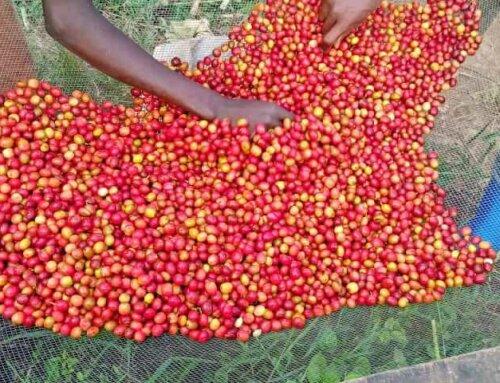 Burundi – Twungurane