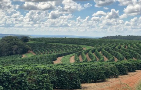 Guima Estates -Brazil