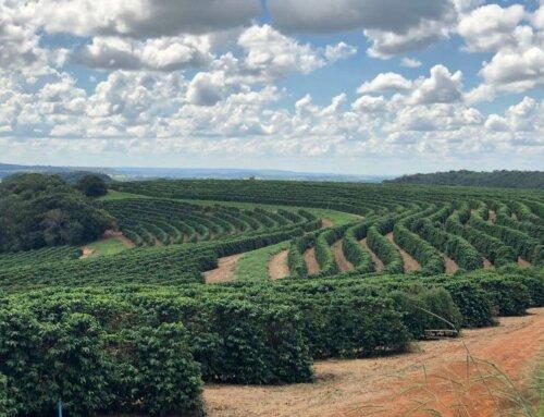 Brazil – Guima Estates